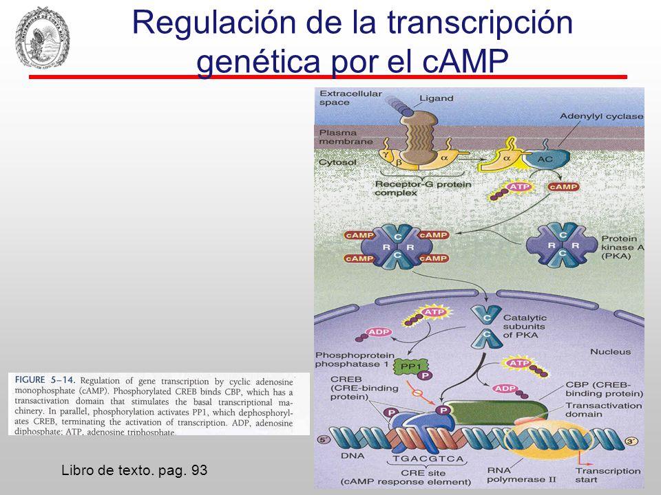 Complejo βγ de G i/o rrtrrrrrrrrrrrrrrrr rrrrrrrrr PLA 2 MAP kinase