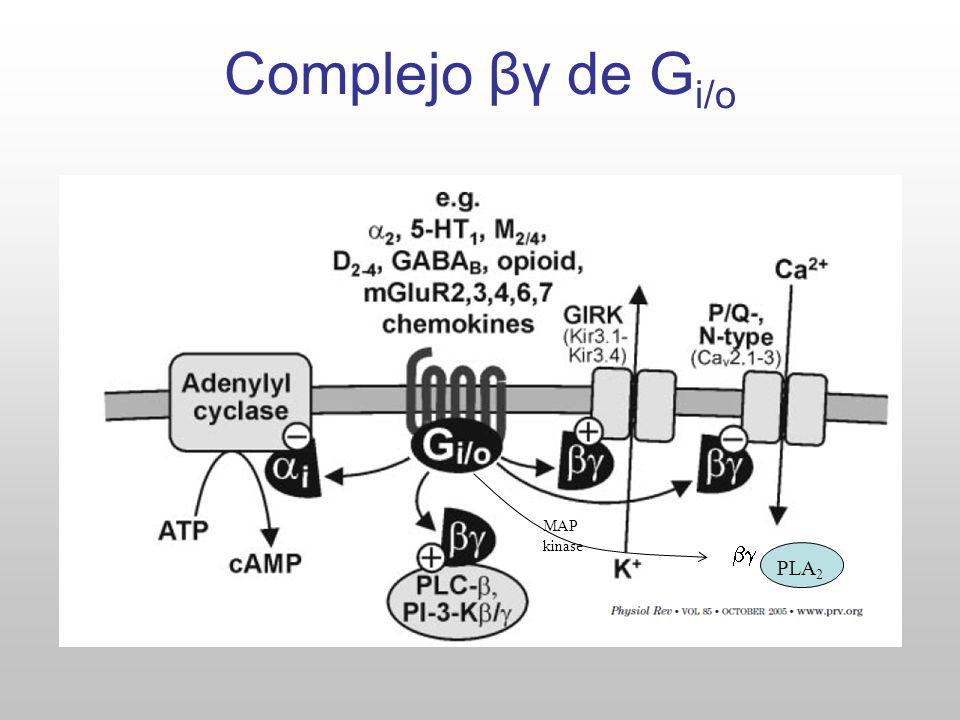 Los productos de la hidrólisis del PIP 2 PLA 2 El receptor para IP3 es un tetrámero, c/subunidad : Libro de texto.
