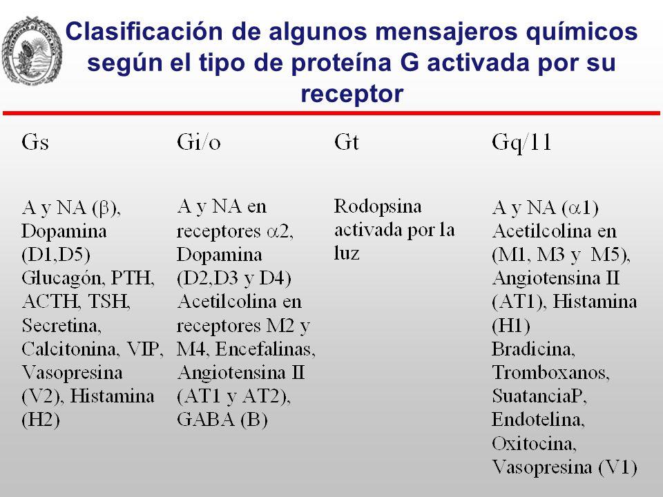 Las prot G monoméricas o pequeñas También presentan ciclo de activación.