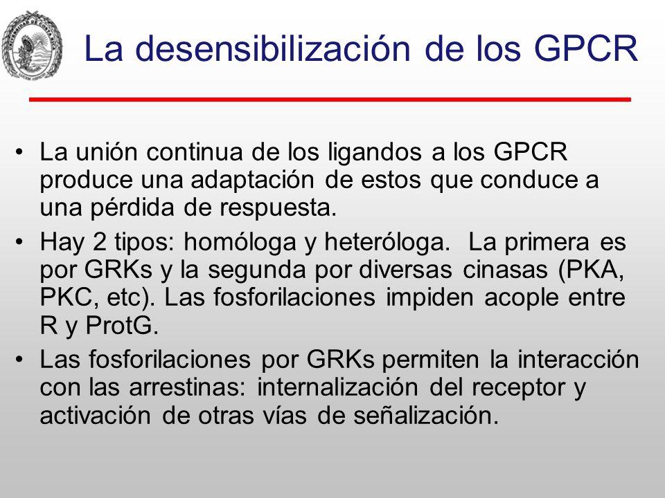 Desensibilización homóloga/ heterológa Rang, H.P.et al: Rang and Dales Pharmacology, 6th ed.