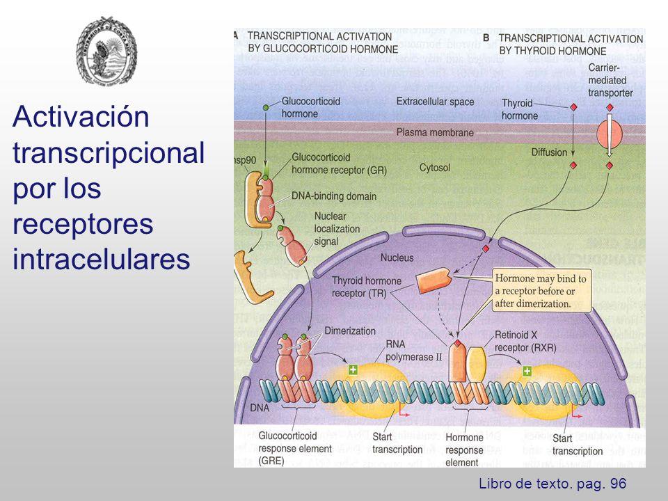 Clasificación de los receptores intracelulares o nucleares Clase I: familia esteroidea: Rs para progesterona, estrógenos, andrógenos, glucocorticoides y mineralocorticoides.
