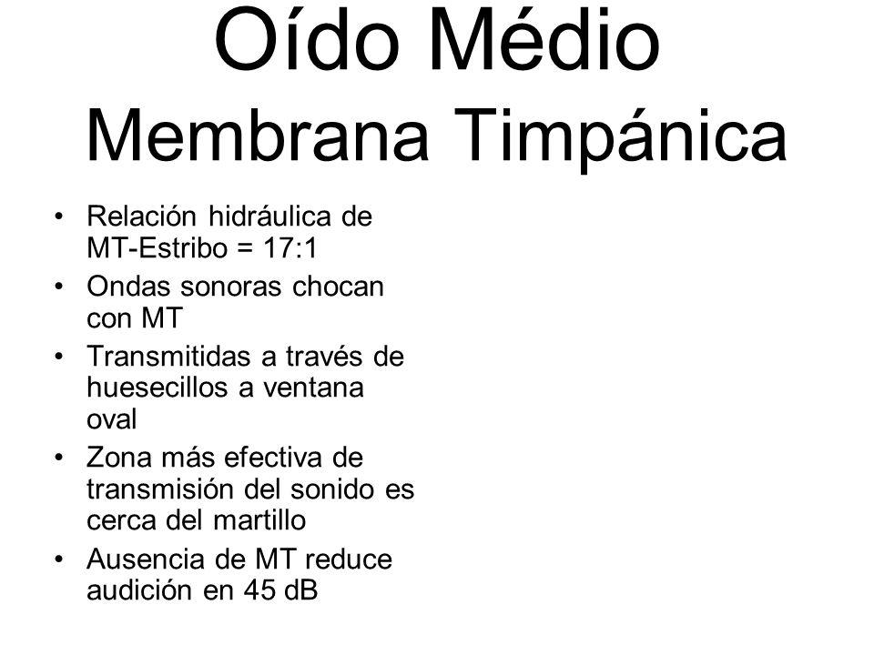 Oído Médio Membrana Timpánica Relación hidráulica de MT-Estribo = 17:1 Ondas sonoras chocan con MT Transmitidas a través de huesecillos a ventana oval