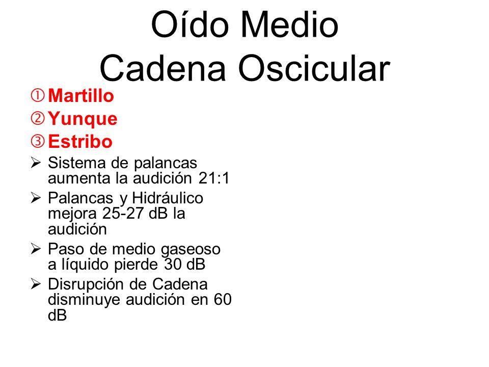 Oído Medio Cadena Oscicular Martillo Yunque Estribo Sistema de palancas aumenta la audición 21:1 Palancas y Hidráulico mejora 25-27 dB la audición Pas