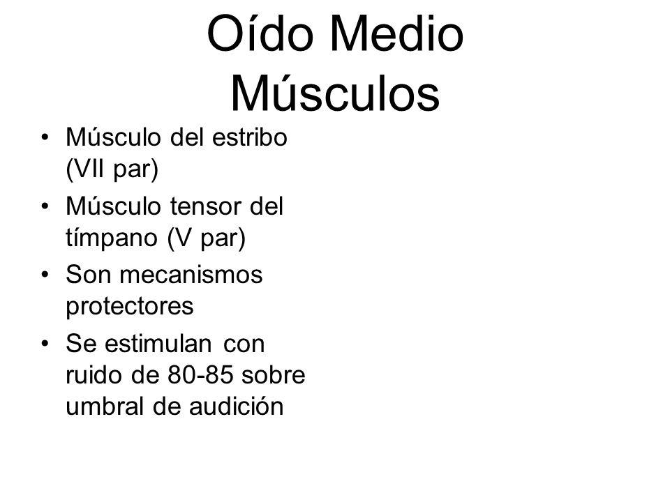 Oído Medio Músculos Músculo del estribo (VII par) Músculo tensor del tímpano (V par) Son mecanismos protectores Se estimulan con ruido de 80-85 sobre
