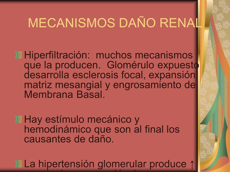 MECANISMOS DAÑO RENAL Hiperfiltración: muchos mecanismos que la producen. Glomérulo expuesto desarrolla esclerosis focal, expansión matriz mesangial y