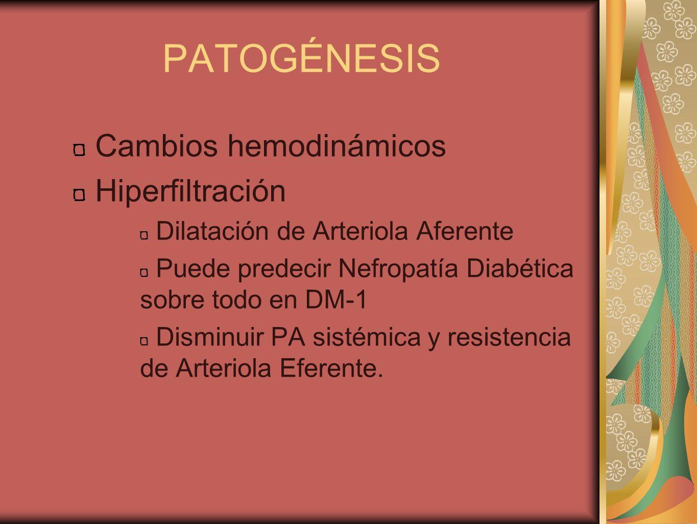 PATOGÉNESIS Cambios hemodinámicos Hiperfiltración Dilatación de Arteriola Aferente Puede predecir Nefropatía Diabética sobre todo en DM-1 Disminuir PA