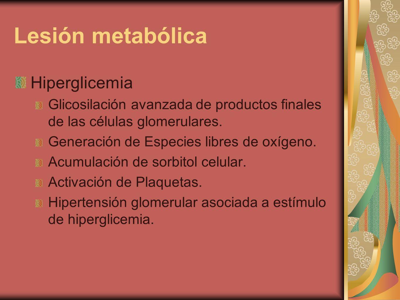 Lesión metabólica Hiperglicemia Glicosilación avanzada de productos finales de las células glomerulares. Generación de Especies libres de oxígeno. Acu