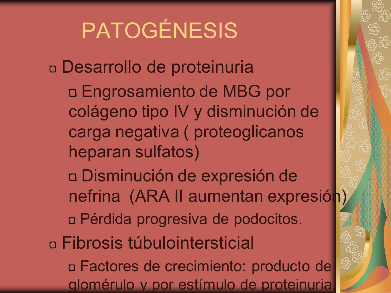 PATOGÉNESIS Desarrollo de proteinuria Engrosamiento de MBG por colágeno tipo IV y disminución de carga negativa ( proteoglicanos heparan sulfatos) Dis