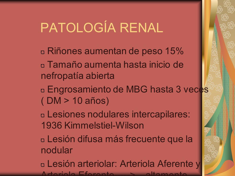 PATOLOGÍA RENAL Riñones aumentan de peso 15% Tamaño aumenta hasta inicio de nefropatía abierta Engrosamiento de MBG hasta 3 veces ( DM > 10 años) Lesi