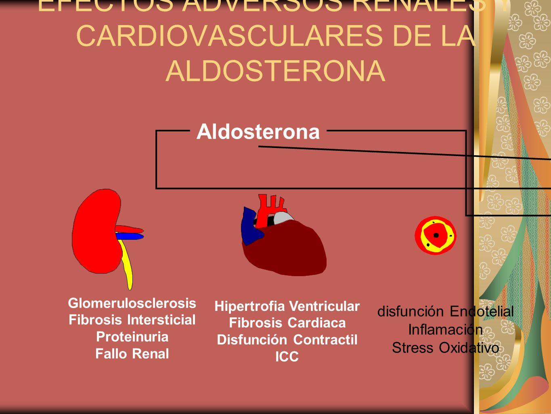 EFECTOS ADVERSOS RENALES Y CARDIOVASCULARES DE LA ALDOSTERONA Glomerulosclerosis Fibrosis Intersticial Proteinuria Fallo Renal Hipertrofia Ventricular