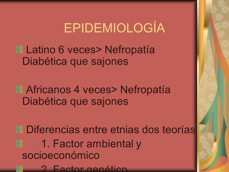 EPIDEMIOLOGÍA Latino 6 veces> Nefropatía Diabética que sajones Africanos 4 veces> Nefropatía Diabética que sajones Diferencias entre etnias dos teoría