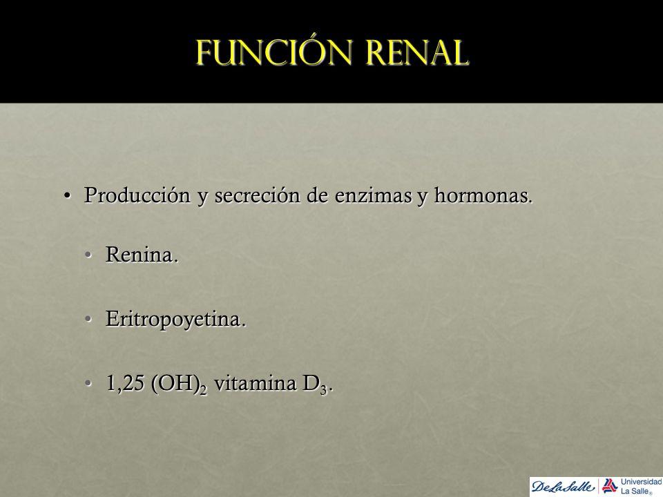 Función renal Producción y secreción de enzimas y hormonas.Producción y secreción de enzimas y hormonas. Renina.Renina. Eritropoyetina.Eritropoyetina.