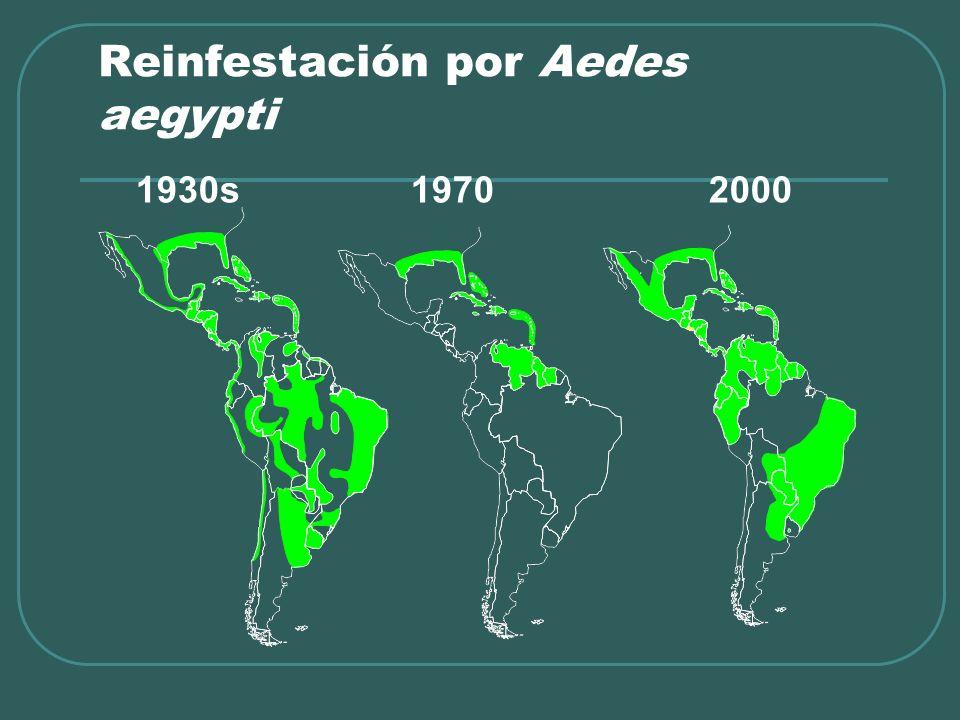 Reinfestación por Aedes aegypti 1930s 1970 2000
