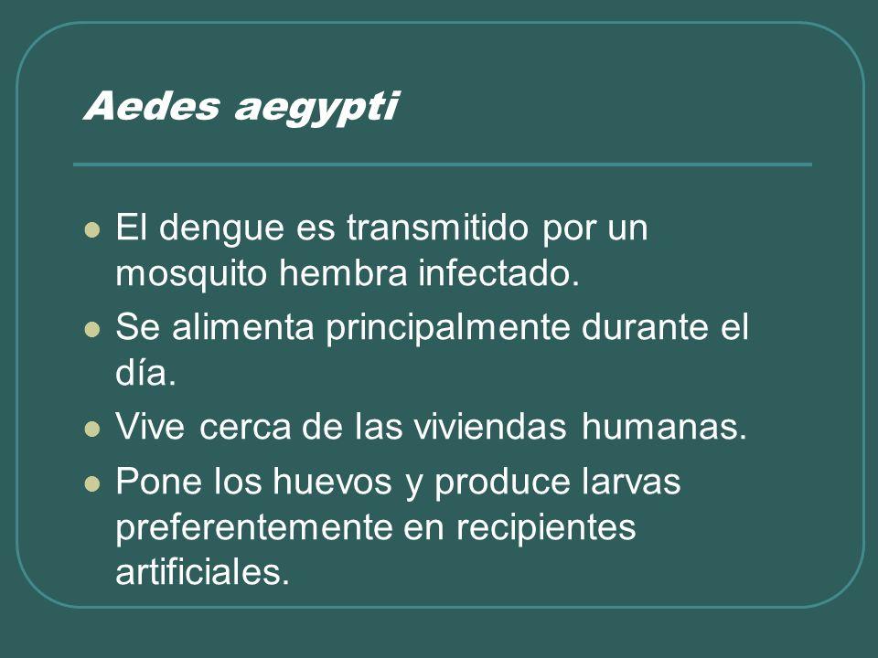 Aedes aegypti El dengue es transmitido por un mosquito hembra infectado. Se alimenta principalmente durante el día. Vive cerca de las viviendas humana