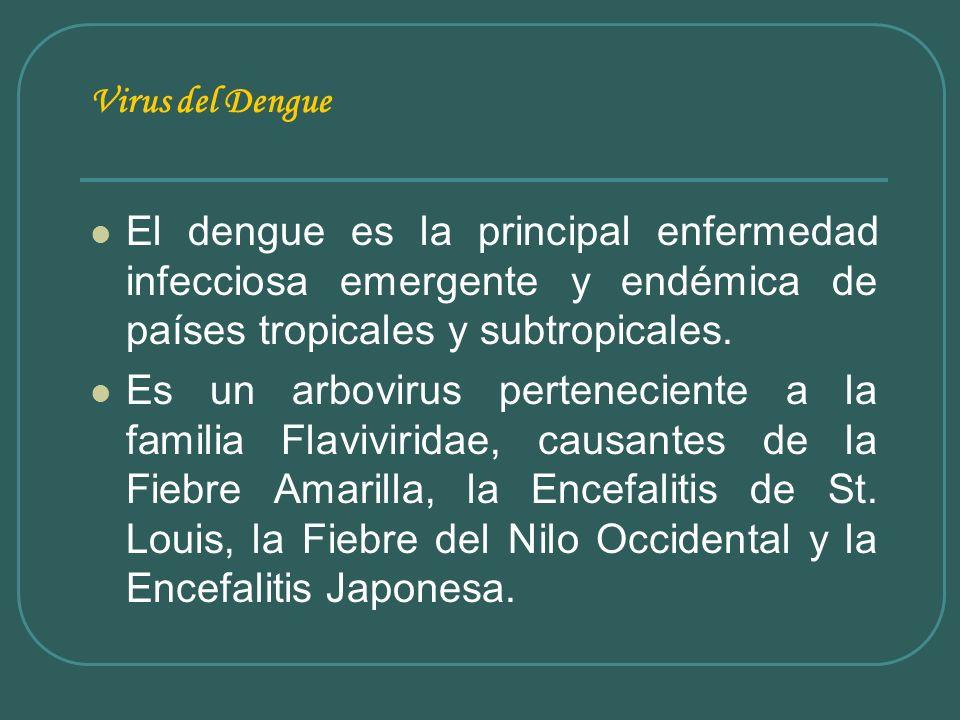 Virus del Dengue El dengue es la principal enfermedad infecciosa emergente y endémica de países tropicales y subtropicales. Es un arbovirus pertenecie