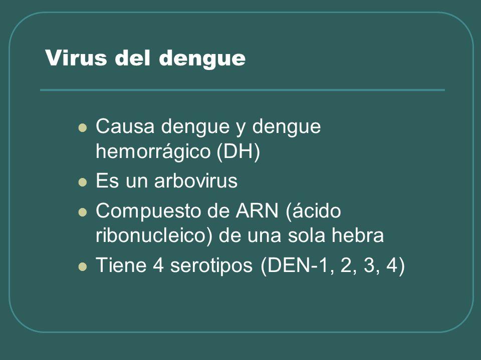 Virus del dengue Causa dengue y dengue hemorrágico (DH) Es un arbovirus Compuesto de ARN (ácido ribonucleico) de una sola hebra Tiene 4 serotipos (DEN