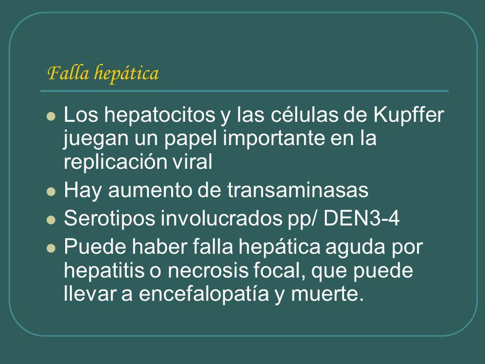 Falla hepática Los hepatocitos y las células de Kupffer juegan un papel importante en la replicación viral Hay aumento de transaminasas Serotipos invo