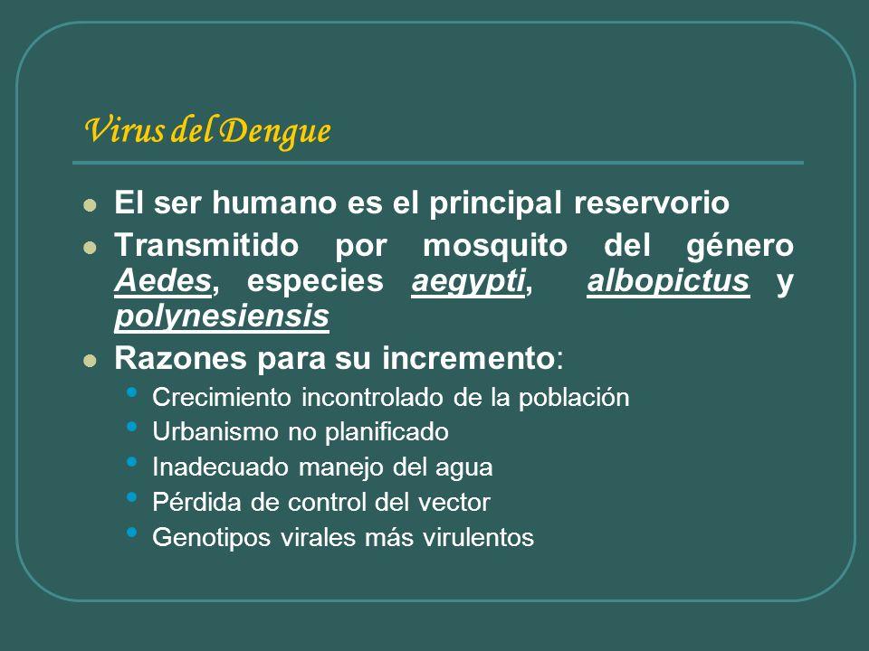 Virus del Dengue El ser humano es el principal reservorio Transmitido por mosquito del género Aedes, especies aegypti, albopictus y polynesiensis Razo
