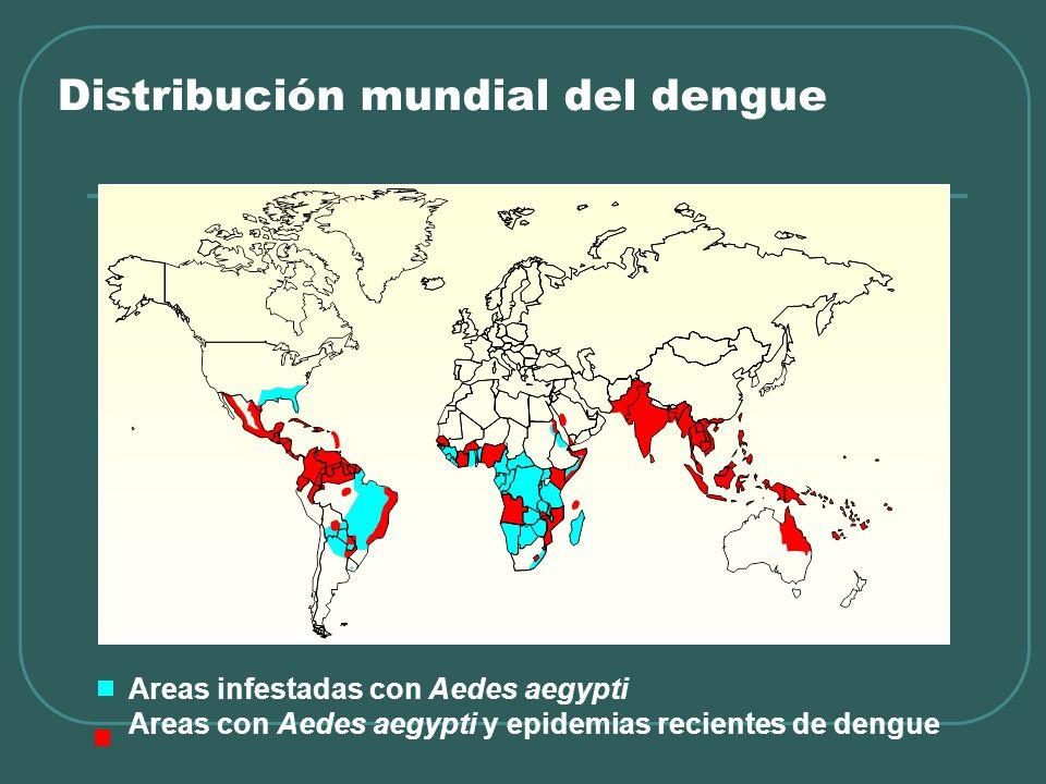 Distribución mundial del dengue Areas infestadas con Aedes aegypti Areas con Aedes aegypti y epidemias recientes de dengue