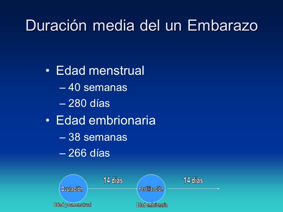 Edad menstrual –40 semanas –280 días Edad embrionaria –38 semanas –266 días Duración media del un Embarazo
