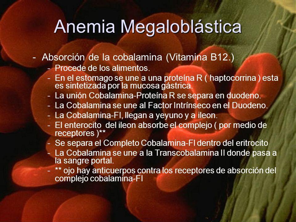 -Absorción de la cobalamina (Vitamina B12.) -Procede de los alimentos. -En el estomago se une a una proteína R ( haptocorrina ) esta es sintetizada po