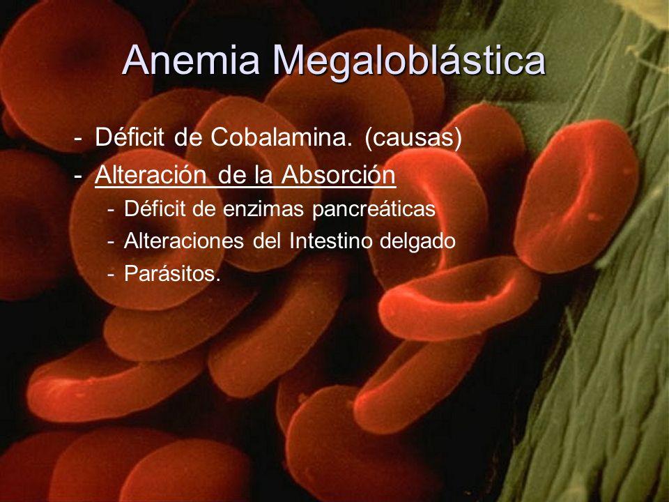 Anemia Megaloblástica -Déficit de Cobalamina. (causas) -Alteración de la Absorción -Déficit de enzimas pancreáticas -Alteraciones del Intestino delgad
