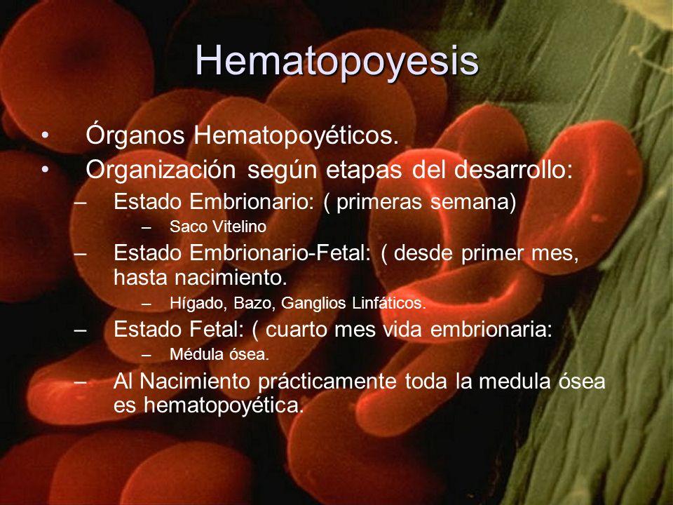 Hematopoyesis Órganos Hematopoyéticos. Organización según etapas del desarrollo: –Estado Embrionario: ( primeras semana) –Saco Vitelino –Estado Embrio