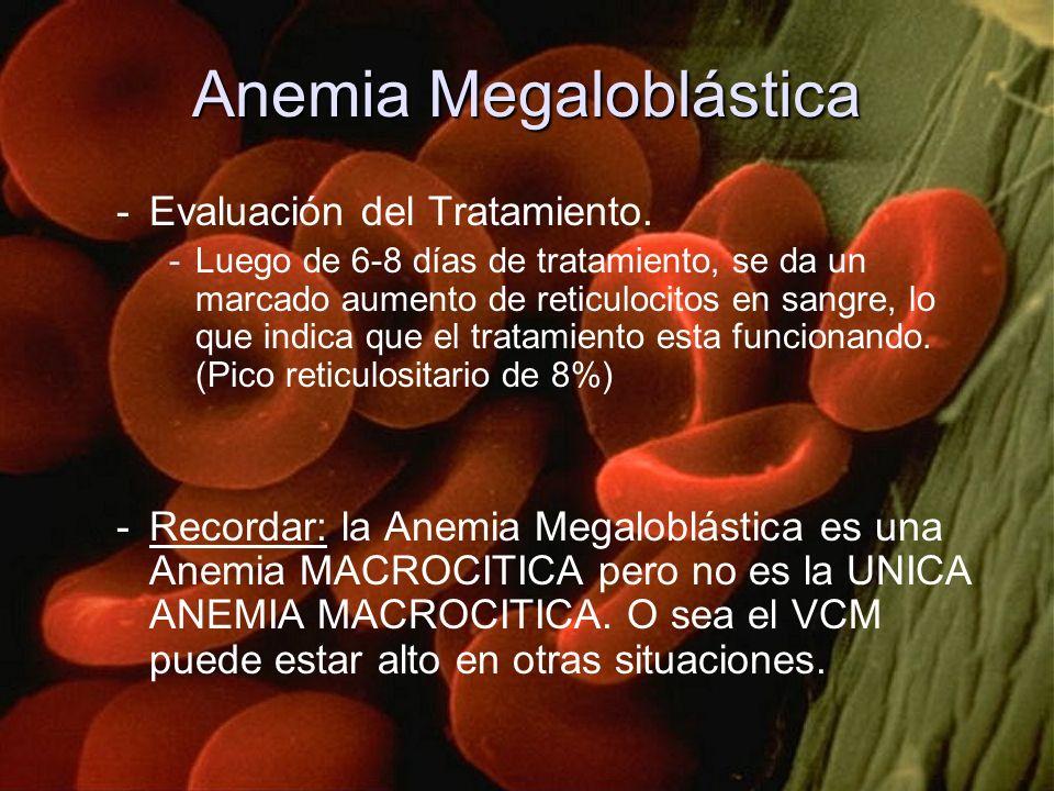 Anemia Megaloblástica -Evaluación del Tratamiento. -Luego de 6-8 días de tratamiento, se da un marcado aumento de reticulocitos en sangre, lo que indi