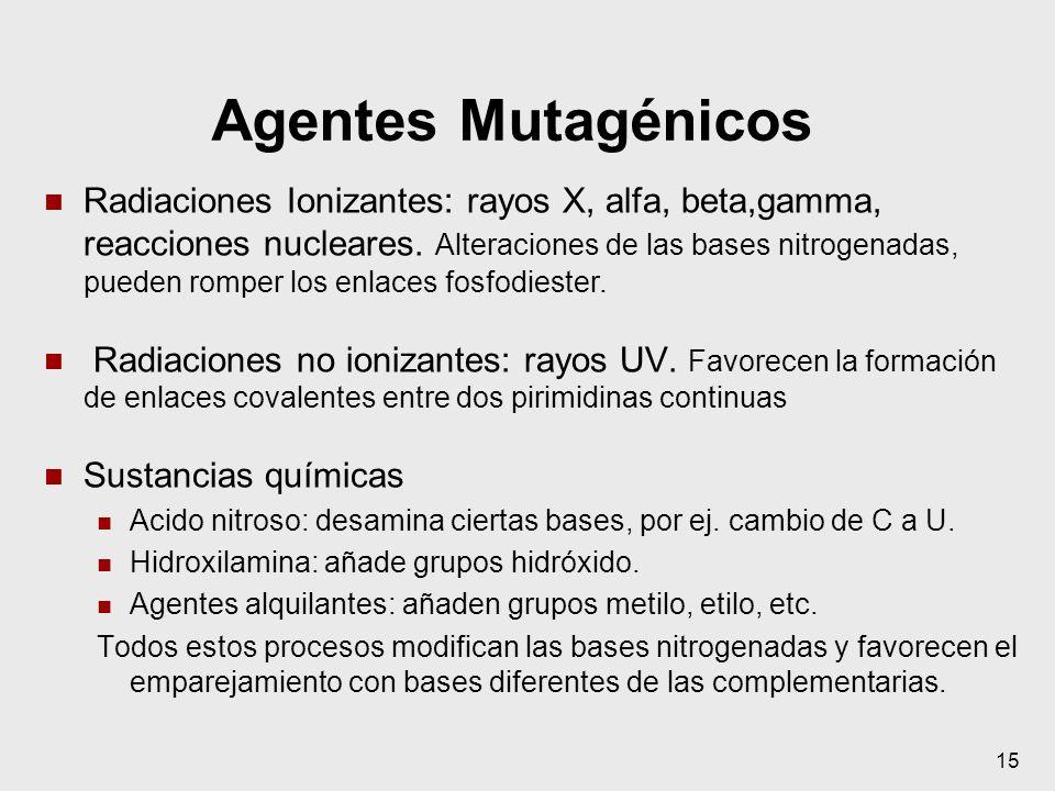 Agentes Mutagénicos Radiaciones Ionizantes: rayos X, alfa, beta,gamma, reacciones nucleares. Alteraciones de las bases nitrogenadas, pueden romper los