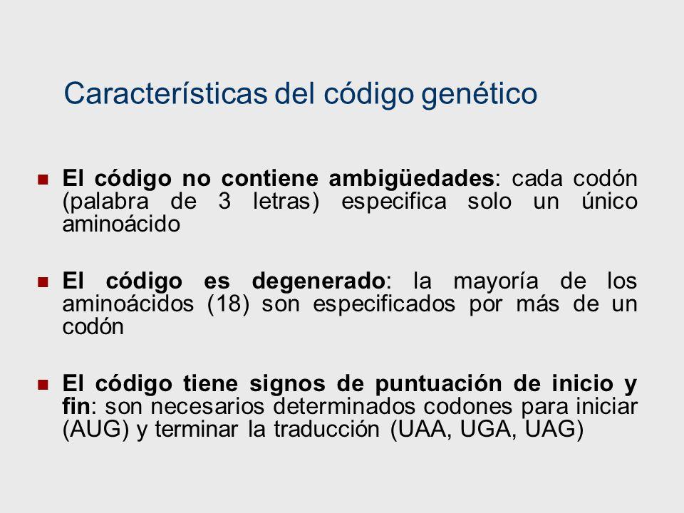 Características del código genético El código no contiene ambigüedades: cada codón (palabra de 3 letras) especifica solo un único aminoácido El código