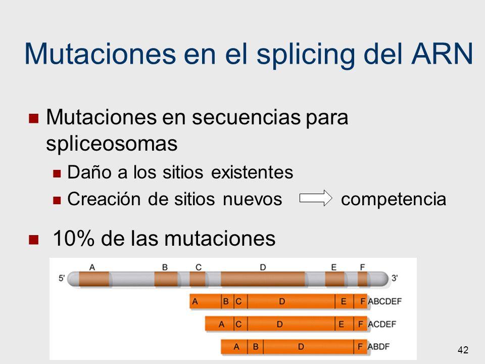 42 Mutaciones en el splicing del ARN Mutaciones en secuencias para spliceosomas Daño a los sitios existentes Creación de sitios nuevos competencia 10%