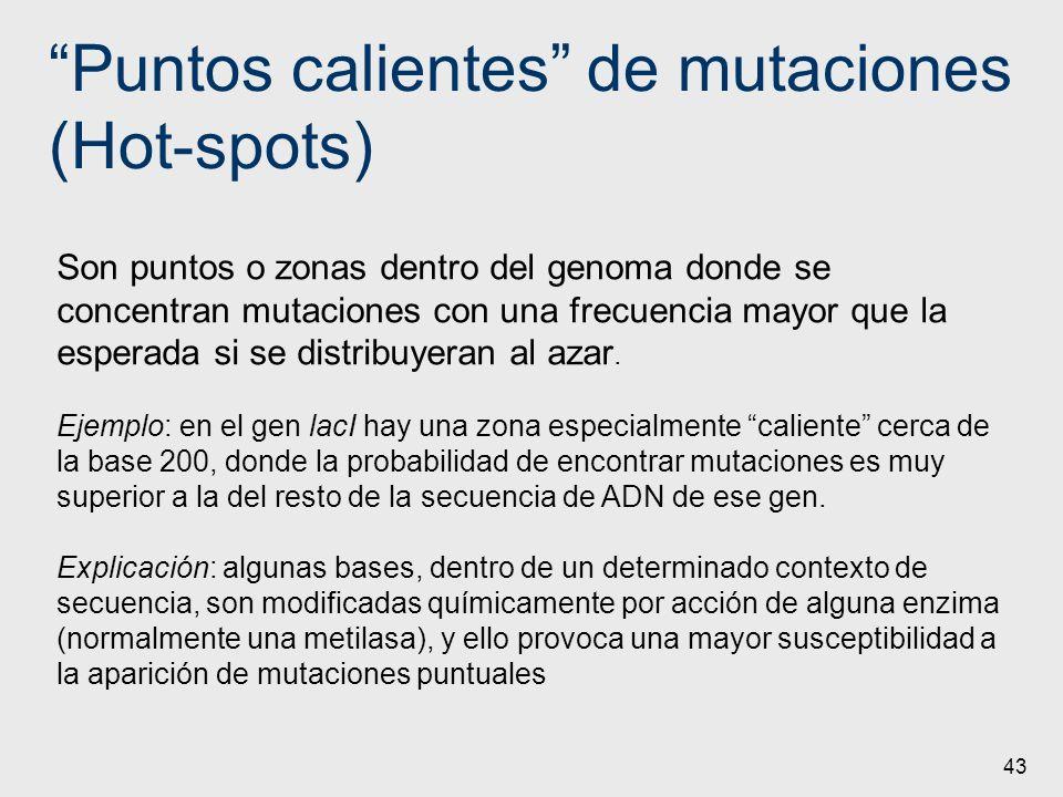 Puntos calientes de mutaciones (Hot-spots) 43 Son puntos o zonas dentro del genoma donde se concentran mutaciones con una frecuencia mayor que la espe