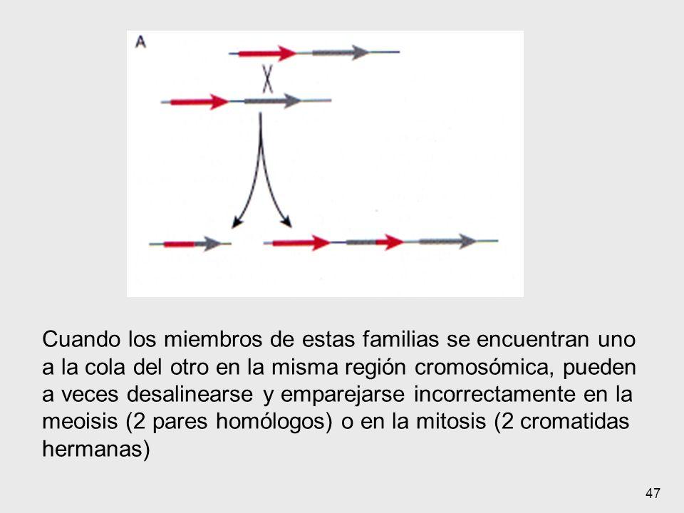 47 Cuando los miembros de estas familias se encuentran uno a la cola del otro en la misma región cromosómica, pueden a veces desalinearse y emparejars