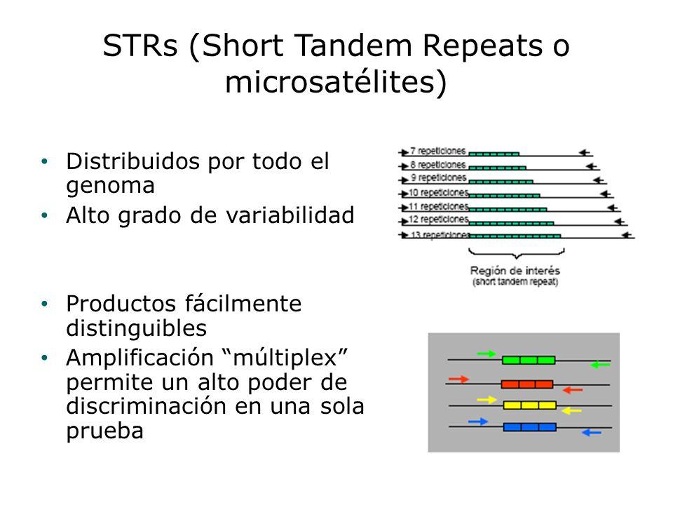 STRs (Short Tandem Repeats o microsatélites) Distribuidos por todo el genoma Alto grado de variabilidad Productos fácilmente distinguibles Amplificaci