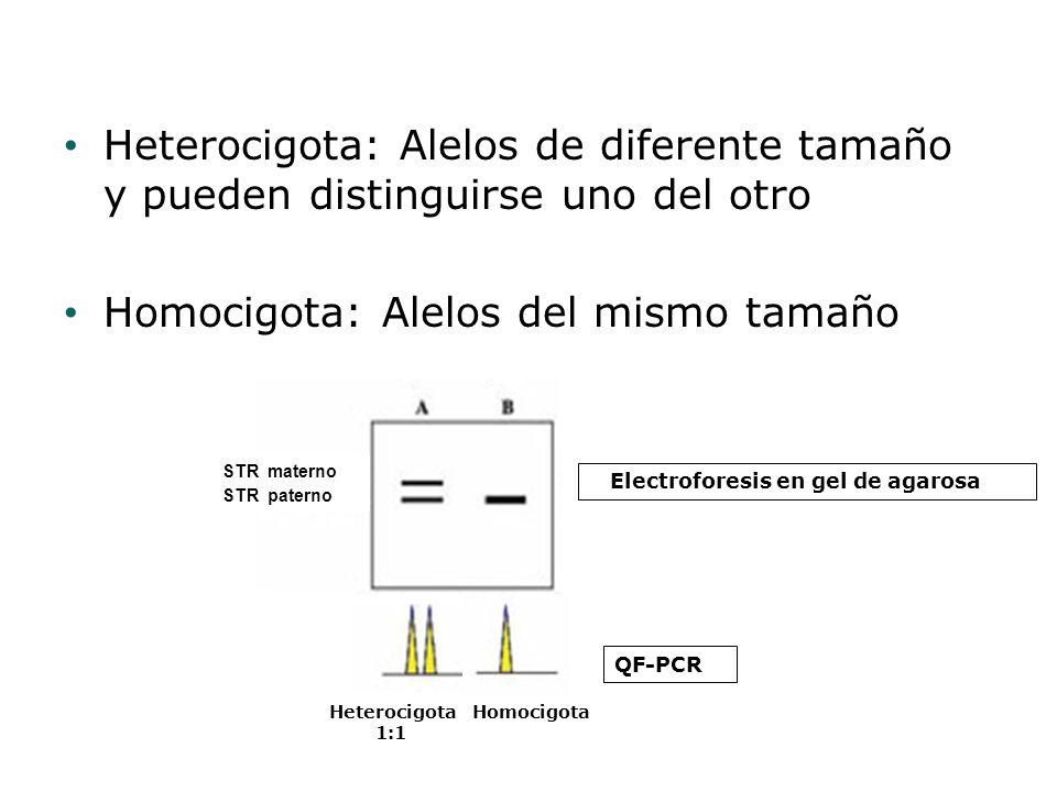 Heterocigota: Alelos de diferente tamaño y pueden distinguirse uno del otro Homocigota: Alelos del mismo tamaño Heterocigota 1:1 Homocigota Electrofor