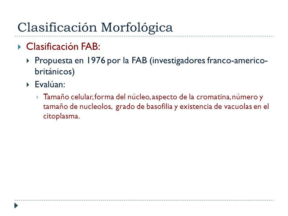 Clasificación Morfológica Clasificación FAB: Propuesta en 1976 por la FAB (investigadores franco-americo- británicos) Evalúan: Tamaño celular, forma d