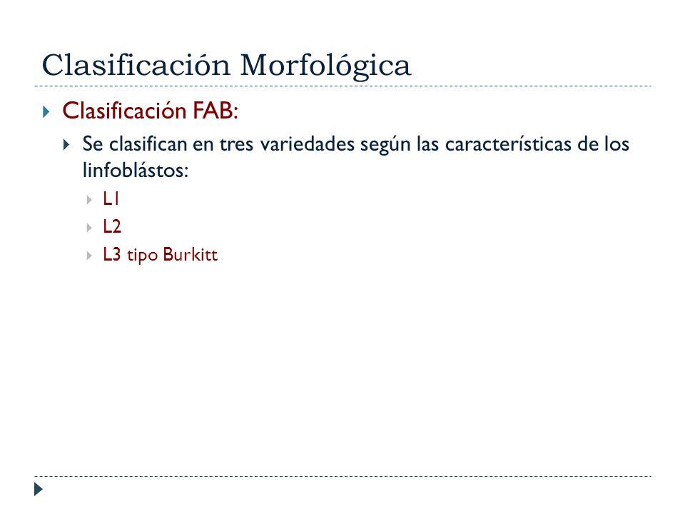 Clasificación Morfológica Clasificación FAB: Se clasifican en tres variedades según las características de los linfoblástos: L1 L2 L3 tipo Burkitt