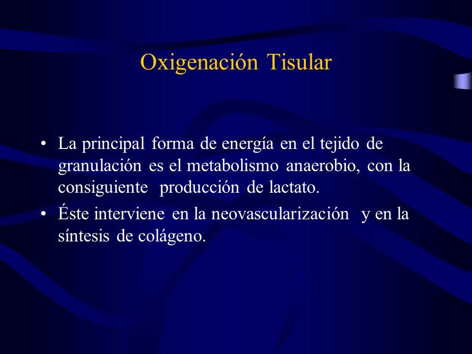 Oxigenación Tisular La principal forma de energía en el tejido de granulación es el metabolismo anaerobio, con la consiguiente producción de lactato.
