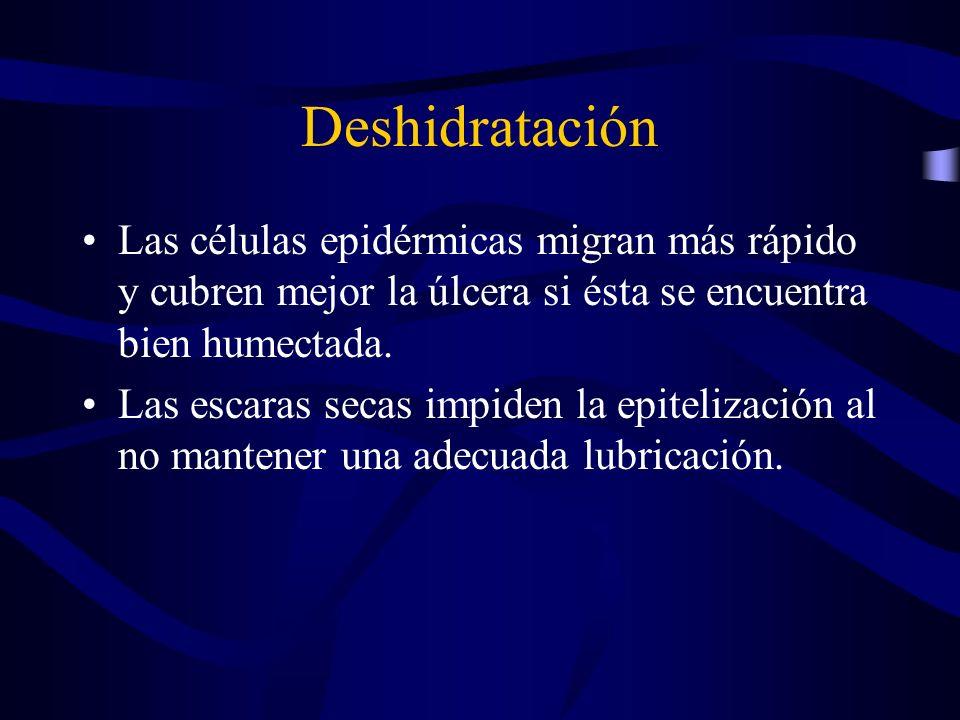Deshidratación Las células epidérmicas migran más rápido y cubren mejor la úlcera si ésta se encuentra bien humectada. Las escaras secas impiden la ep