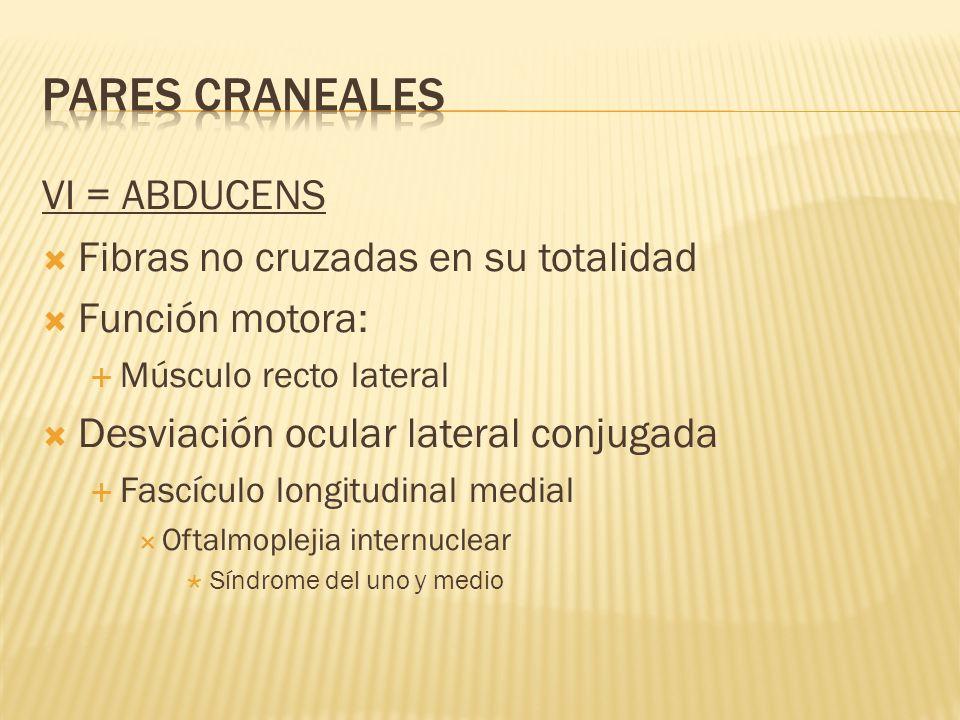 VI = ABDUCENS Fibras no cruzadas en su totalidad Función motora: Músculo recto lateral Desviación ocular lateral conjugada Fascículo longitudinal medi