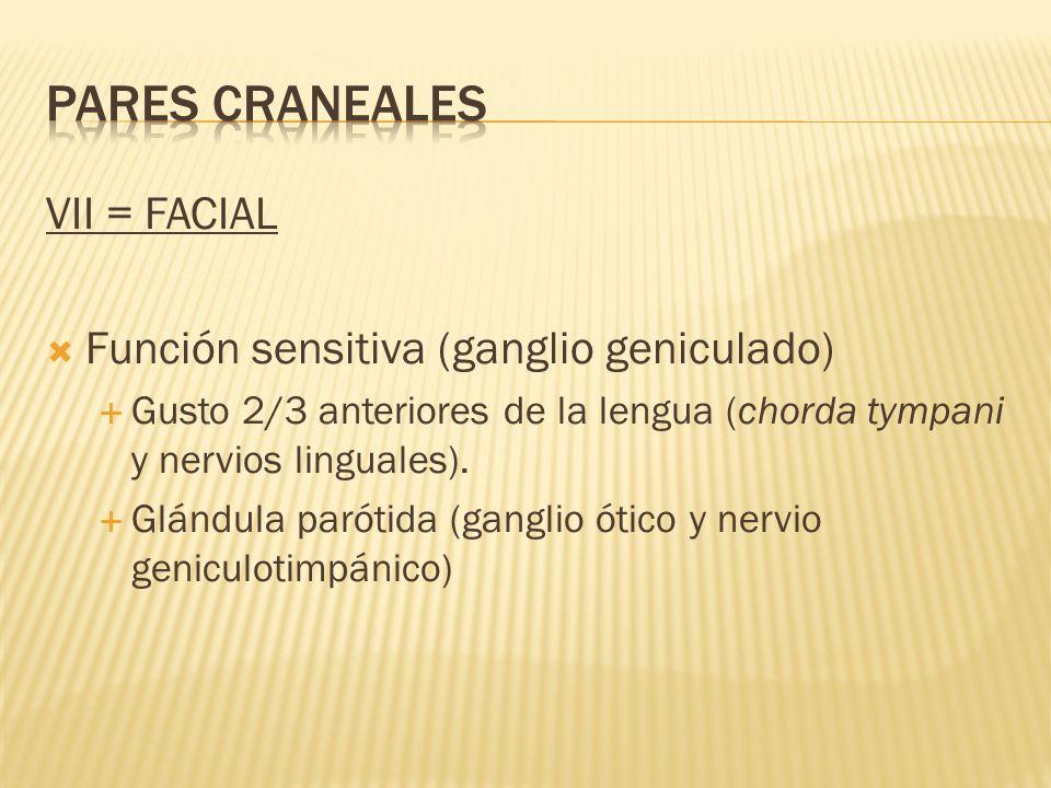 VII = FACIAL Función sensitiva (ganglio geniculado) Gusto 2/3 anteriores de la lengua (chorda tympani y nervios linguales). Glándula parótida (ganglio