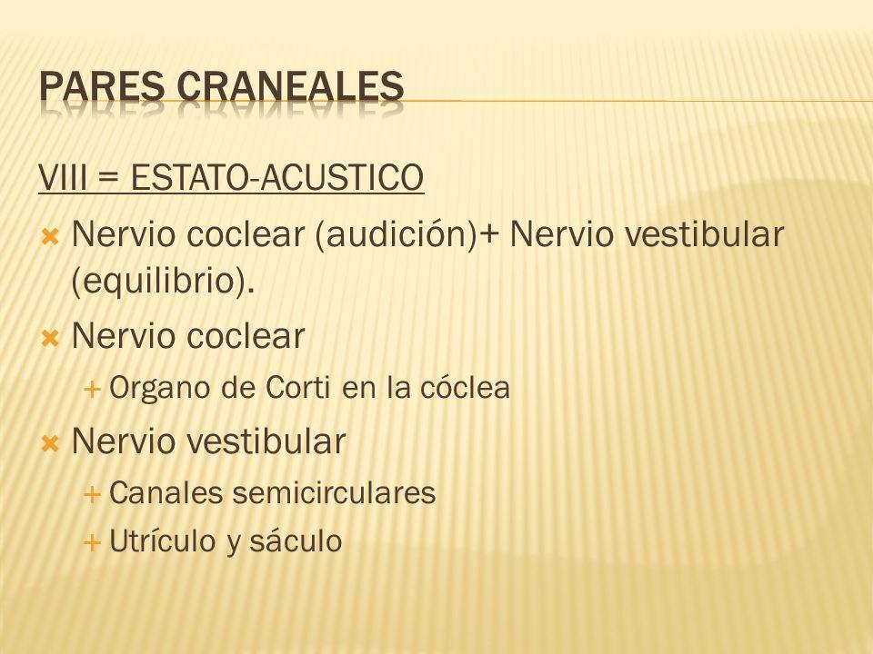 VIII = ESTATO-ACUSTICO Nervio coclear (audición)+ Nervio vestibular (equilibrio). Nervio coclear Organo de Corti en la cóclea Nervio vestibular Canale