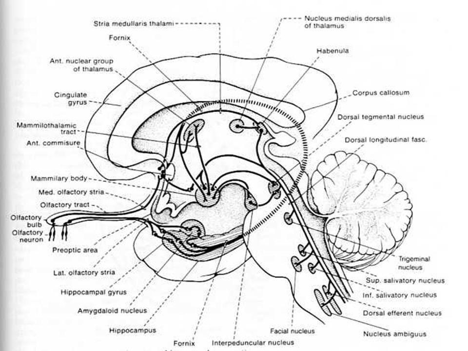 II = OPTICO Nervio-Quiasma-Tracto-Corteza visual.Conos: colores, mayor agudeza visual.
