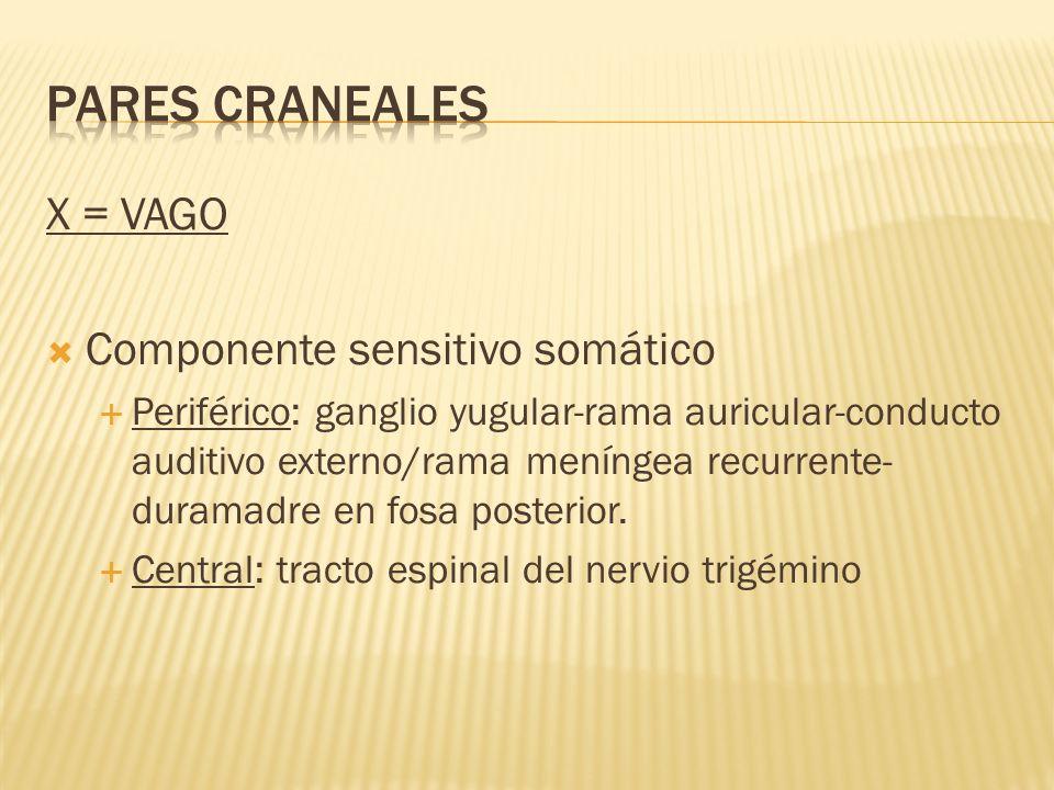 X = VAGO Componente sensitivo somático Periférico: ganglio yugular-rama auricular-conducto auditivo externo/rama meníngea recurrente- duramadre en fos