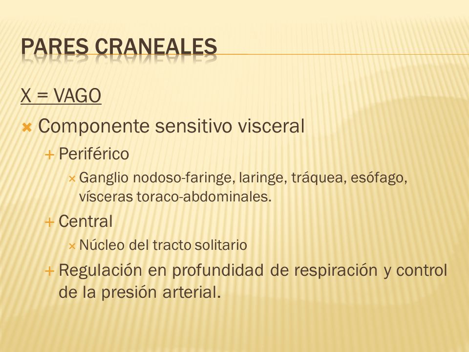 X = VAGO Componente sensitivo visceral Periférico Ganglio nodoso-faringe, laringe, tráquea, esófago, vísceras toraco-abdominales. Central Núcleo del t