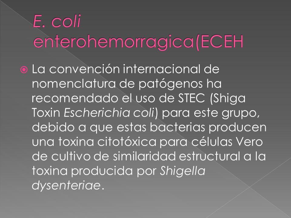 La convención internacional de nomenclatura de patógenos ha recomendado el uso de STEC (Shiga Toxin Escherichia coli) para este grupo, debido a que es