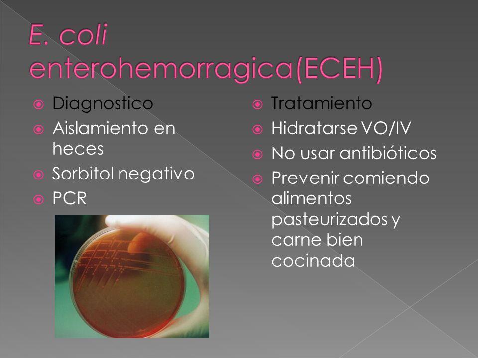 Diagnostico Aislamiento en heces Sorbitol negativo PCR Tratamiento Hidratarse VO/IV No usar antibióticos Prevenir comiendo alimentos pasteurizados y c