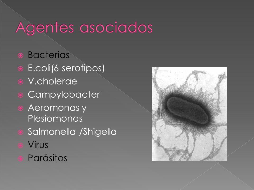 Bacterias E.coli(6 serotipos) V.cholerae Campylobacter Aeromonas y Plesiomonas Salmonella /Shigella Virus Parásitos