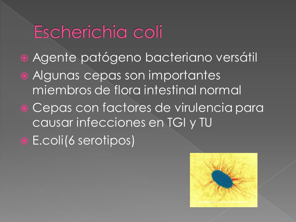 Agente patógeno bacteriano versátil Algunas cepas son importantes miembros de flora intestinal normal Cepas con factores de virulencia para causar inf