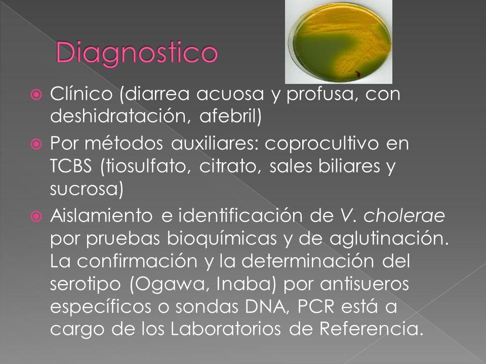 Clínico (diarrea acuosa y profusa, con deshidratación, afebril) Por métodos auxiliares: coprocultivo en TCBS (tiosulfato, citrato, sales biliares y su